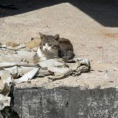 pic of homeless  - Homeless cat sitting on a pile of papers against the sunshine - JPG