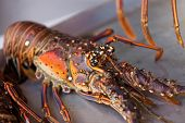 stock photo of crawdads  - Close up photo of fresh lobster on the plate - JPG
