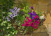 stock photo of petunia  - Colorful plants in wall mounted wrought iron basket including begonia petunia ivy - JPG