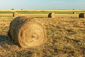 image of hay bale  - Hay bale in the countryside - JPG