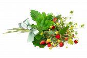 stock photo of bundle  - bundle of wild strawberry isolated on white background - JPG