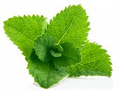 stock photo of mint leaf  - Fresh leaf mint - JPG