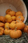 small pumpkins spilling out of wooden barrel