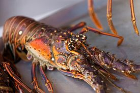 image of crawdads  - Close up photo of fresh lobster on the plate - JPG
