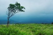 Alone tree with storm clouds