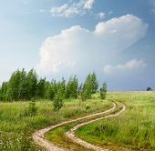 Rural road in field near birches and blue sky