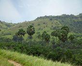 Palm trees of the national park Komodo. Rinca island
