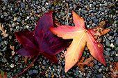 ~Leaves~