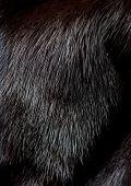 image of villi  - Bright luxurious mink fur texture close - JPG
