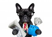Dog Money And Piggy Bank poster