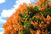 orange flowers with sky