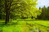 Spring Landscape. Green Park Trees And Flooded Spring Lawn In The Park In Sunny Weather. Colorful Sp poster