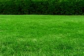 Green Grass Texture Background, Colorful Freshness Grass poster