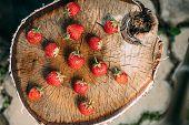 Strawberries. Ripe Strawberry Organic Berries. Juicy Fresh Ripe Red Strawberries On An Old Birch Stu poster