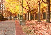 Park Fall
