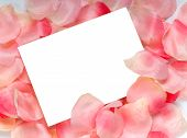Rose Petal Notecard