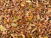 background from autumn leaves, photography, macro
