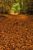 Herfst landschap met een prachtige weg met gekleurde bomen.
