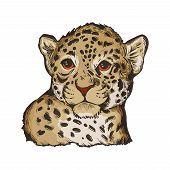 Jaguar Baby Tabby Portrait Closeup Of Animal Isolated Sketch. Panthera Carnivore Fauna. Wildlife Of  poster