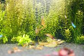 Green Aquatic Plant Aquarium With Blurred Fish On Foreground poster