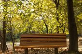 park bench in early autumn morning