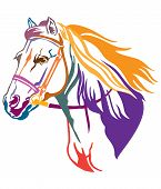 Colorful Decorative Contour Portrait Of Running Horse In Bridle And Long Mane, Looking  In Profile.  poster