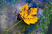 Autumn Sunny Colorful Leaves In River. Autumn Park Trees And Fallen Autumn Leaves On Bank Of River I poster