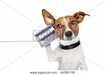 Dog On The Phone poster