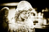 stock photo of tombstone  - Vintage image of a sad angel on a cemetery with a diffused background - JPG