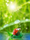 Little ladybug floating on the leaf. Funny traveling concept.