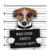 stock photo of mug shot  - mugshot of wanted dog holding a banner - JPG