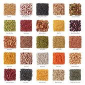 Legume collection with titles isolated on white background