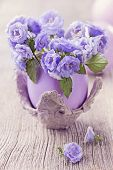 Campanula flowers in the eggshell
