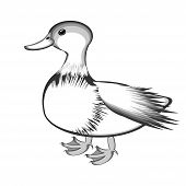 A Monochrome Sketch Of A Duck