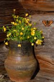 Hungerweeds In Ceramic Flowerpot And Butterfly