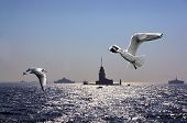 Seagulls Over Bosporus