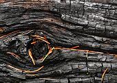 A Charred Wood Of Spruce Pine Needles