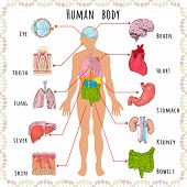 image of internal organs  - Human body medical infographics with person silhouette and organs vector illustration - JPG