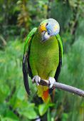 Parrot In The Rainforest