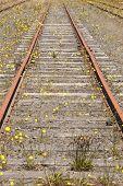 Dandelion Rail