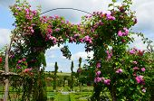 image of pergola  - The romantic alley - JPG
