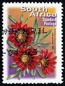 Postage Stamp South Africa 2003 Botterblom, Flowering Plant