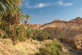 stock photo of oasis  - Famous Mountain oasis Chebika in Tunisia - JPG
