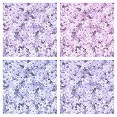 Set of seamless backgrounds with lilac flowers. Vector illustration.