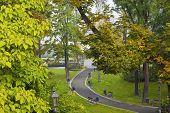 Path in a park on a foggy autumn day