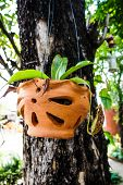 stock photo of nepenthes  - Nepenthes flower in the garden of thailand - JPG