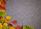 Autumn abstract grey background