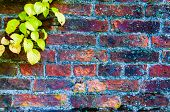 Autumn Leaves Against Red Brick Wall