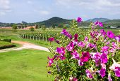 Vineyards And Scenic Natural Beauty