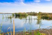 Beautiful Large Lake With Reeds